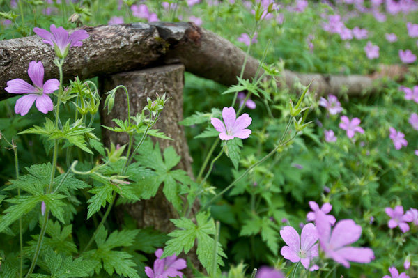 Holzgeländer mit Blumen
