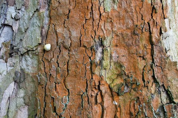 Schnecke auf der Baumrinde