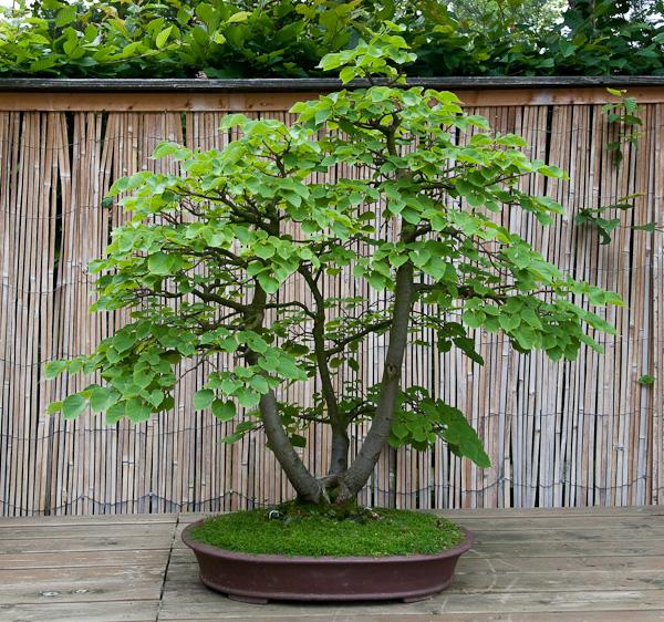 Der japanische Garten und Bonsai im blühenden Barock