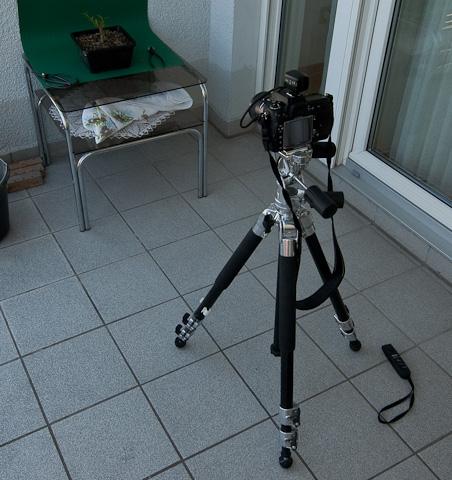 Aufbau bei der Fotografie von Pflanzen