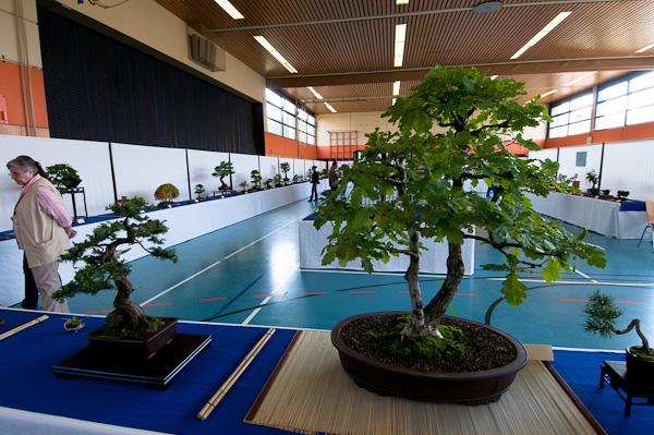 Bonsaiausstellung AK Aichtal-Filder 2010
