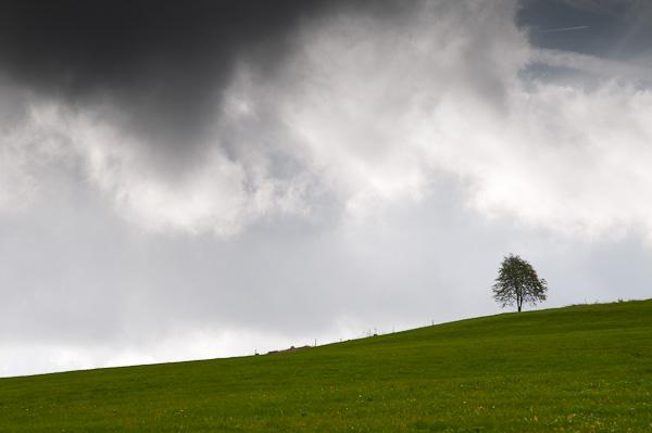 Einzelner Baum im Schwarzwald
