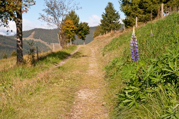 Wanderweg Panoramaweg