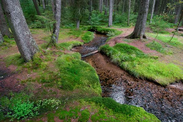 Naturschutzgebiet Taubenmoos