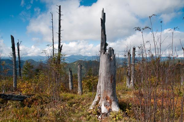 Tote Bäume am Gipfel des Blößling 1309 m
