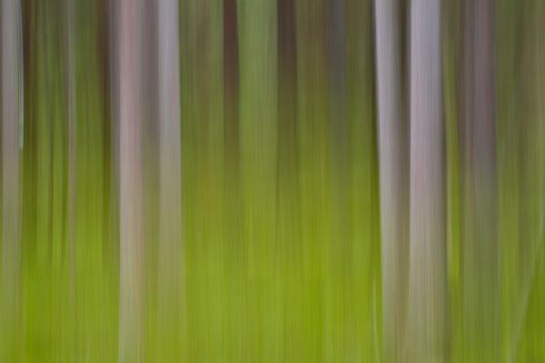 Wald kreativ verwischt
