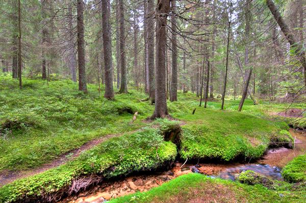 Im Zauberwald - Naturschutzgebiet Taubenmoos