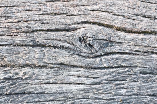 Ast im alten Holz