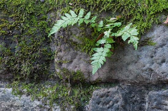 Steine und Natur