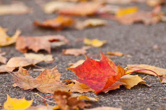 Herbstlaub auf einem Weg