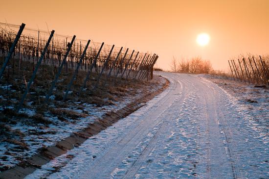Wintermorgen im Weinberg