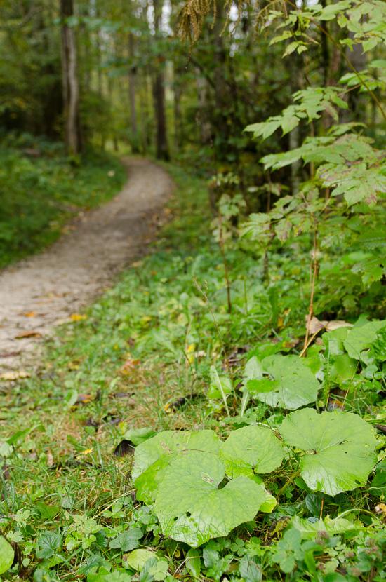 Waldweg an der Ramsauer Ache