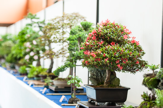 Bonsaiausstellung in der Mehrzweckhalle Aichtal-Grötzingen