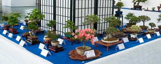 Kleine Shohin-Bonsai