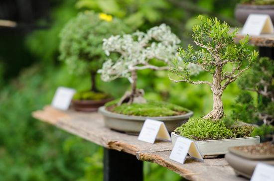 Regal mit kleinen Bonsai-Bäumen