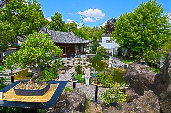 Fotoausflug auf eine Bonsaiausstellung die im Freien stattfand
