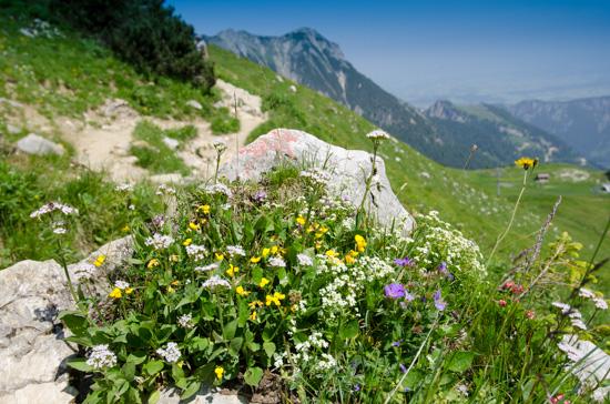 Blumen in den Bergen