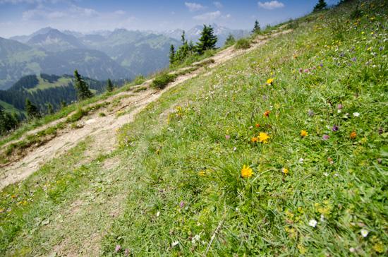 Blumenwiese am Füssener Jöchle