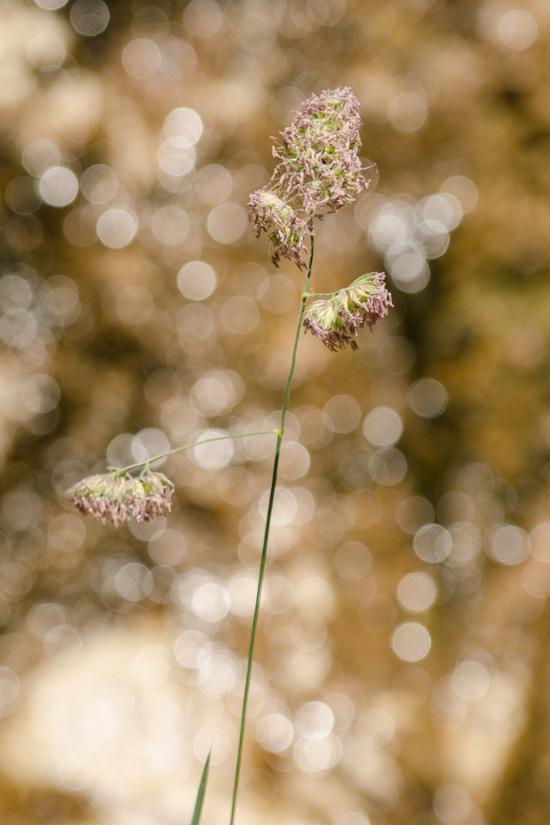 Pflanze und Sonnenreflektionen