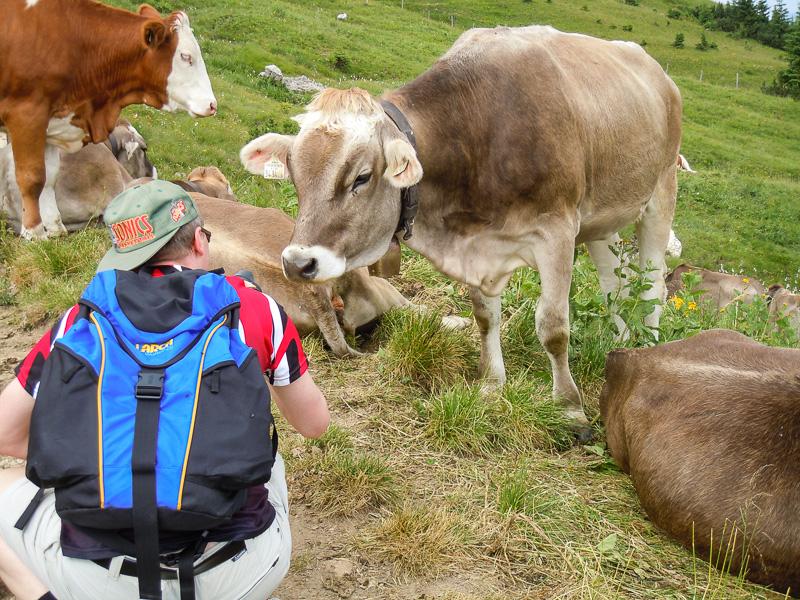 Foto-Shooting mit Kühen auf einer Alm