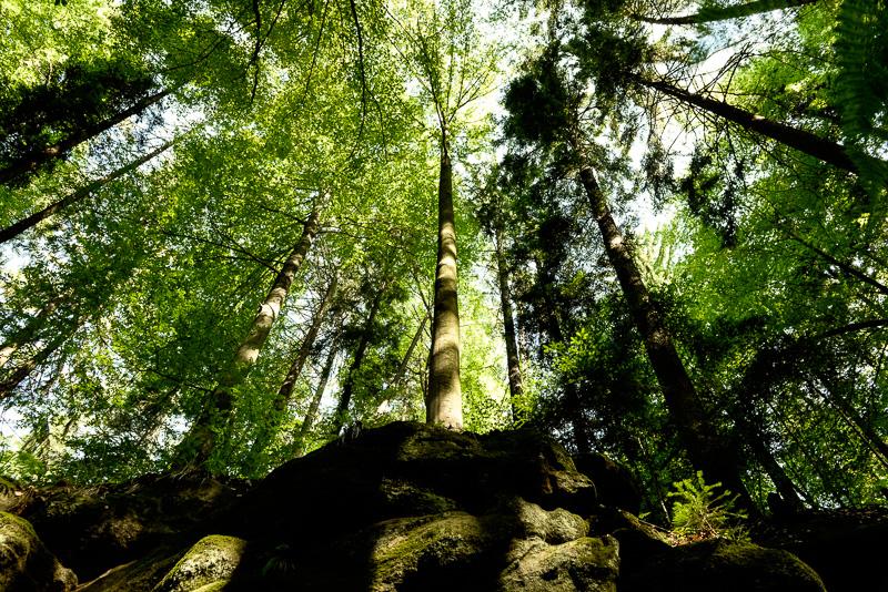 Wald in der Gallengrotte in HDR