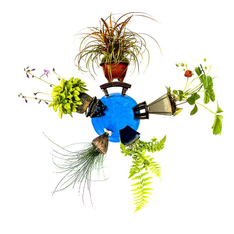 Mini Planet Kusamono - Akzentpflanzen