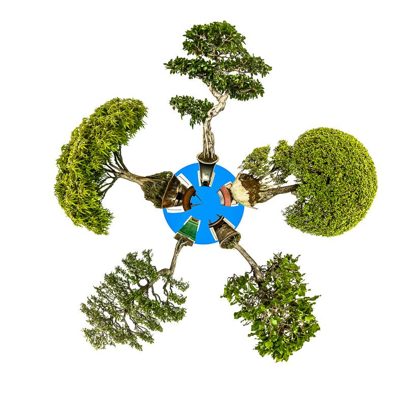 Mini Planet Bonsai Bäume