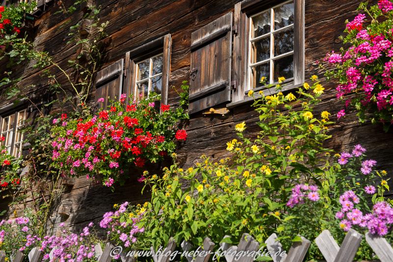 Blühende Blumen vor einem alten Bauernhof