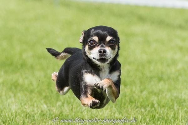 Der fliegende Hund