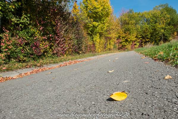 Gelbes Blatt auf einer Straße