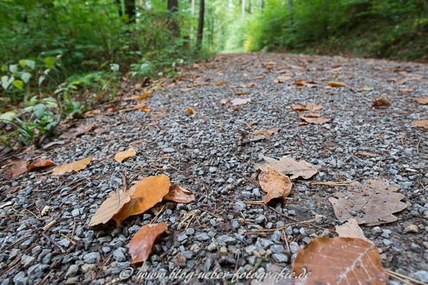 Laub und Weg im Wald