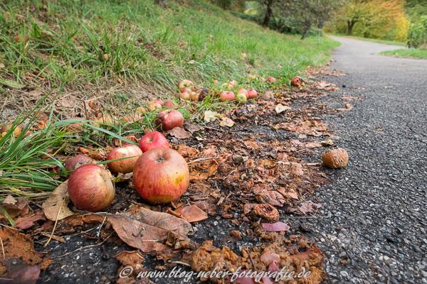 Fallobst - Äpfel