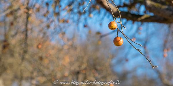 Reife Äpfel im Januar - Fujifilm X-T2 + 2,0/90mm