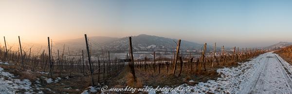 Panorama Weinberg im Januar