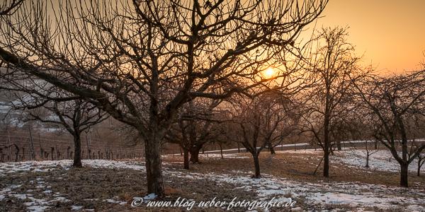 Streuobstwiese mit Apfelbäumen im Winter