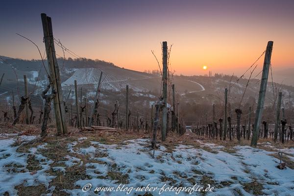 Sonnenaufgang im Winter im Weinberg