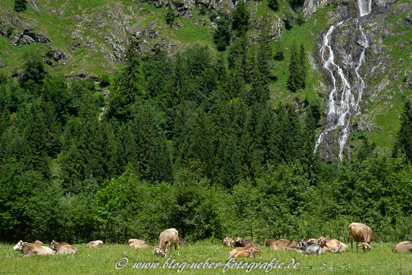 Kühe und Wasserfall im Oytal