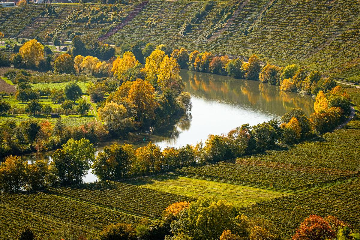 Neckar und Weinberge im Herbst