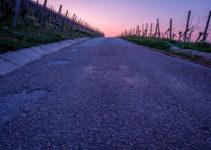 Morgendämmerung im Weinberg