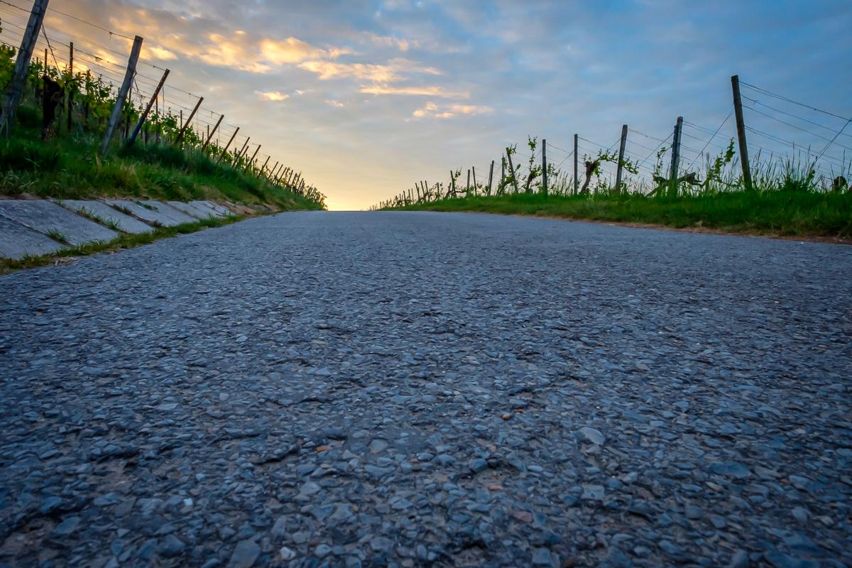 Straße im Weinberg in der Morgendämmerung
