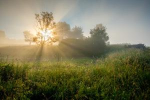 Sonnenstralen im Morgnenebel
