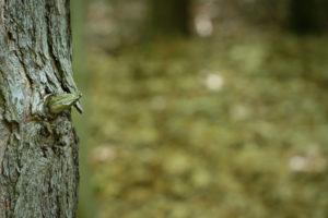 Fotowalk im Wald – Makrofotos