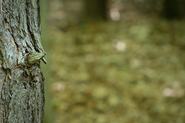 Baumrinde im Wald