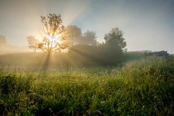 Sonnenstrahlen im Morgennebel