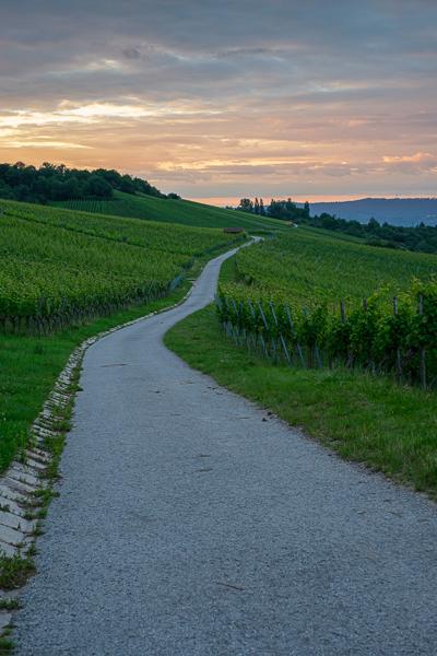 Straße im Weinberg